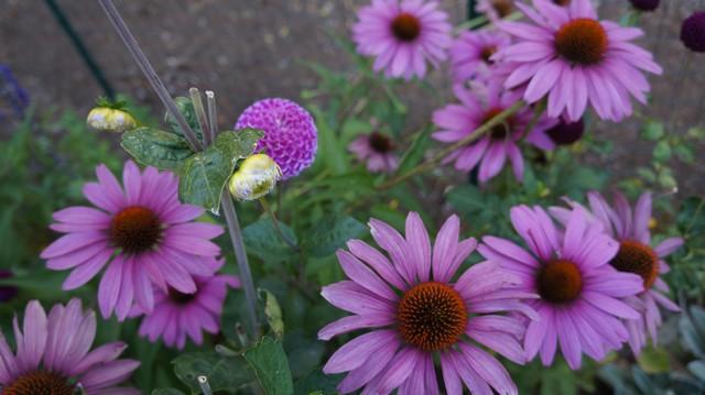 gardensum20145