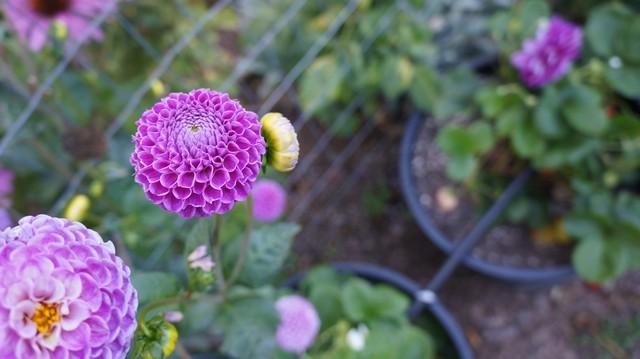 gardensum20147